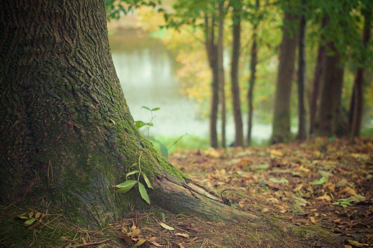 Śliczny i {zadbany zieleniec to nie lada wyzwanie, w szczególności jak jego konserwacją zajmujemy się sami.